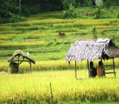 voyage à bali avec activité de la randonnée  a sidemen  au pied du mont agung -balilabelle