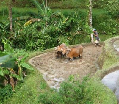 voyage à Bali avec Balilabelle,  kastala randonnee,karangasem avec un guide francophone balinais