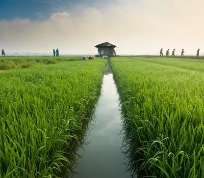 voyage à bali randonnée au  village sidemen au pied mont agung -balilabelle