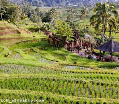 balader dans la region de pupuan( a blimbing)