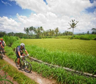 bali bike ride rizières
