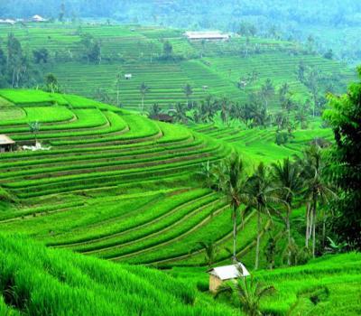 randonnée  à jatiluwih tres belle rizierres en terrasses