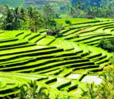 bali randonée ,blimbing,rizierres en terrasses