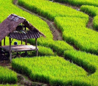 randonnée à Jatiluwih avec la beauté entre les montagnes et les rizières en terrasses
