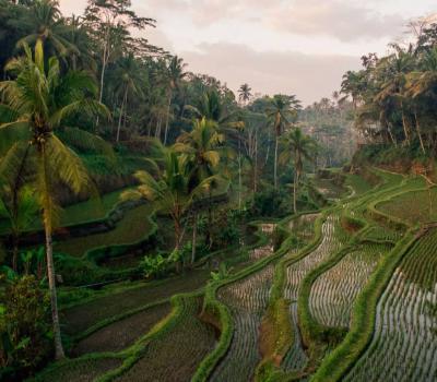 voyage à bali promenades entre rivières et rizières dans les environs d'ubud
