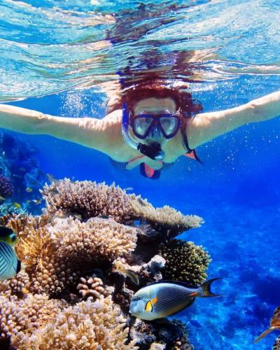 plongée à Bali profiter des lieux naturels sous-marins-balilabelle