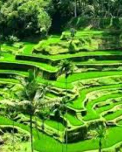 bali circuits 9 nuits et 10 jours-balilabelle