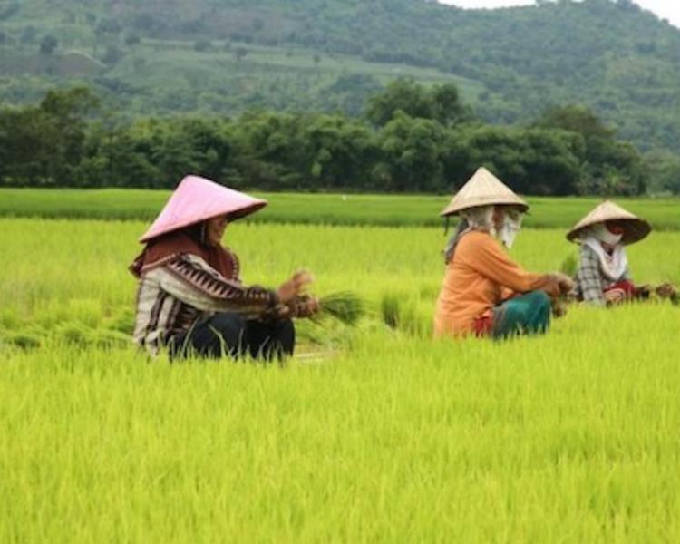 La randonnée  a bali dans le très beau village de belimbing  les rizières en terrasses-balilabelle