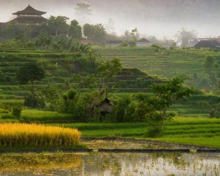 voyage à bali la beauté du village sidemen avec un guide francophone balinais