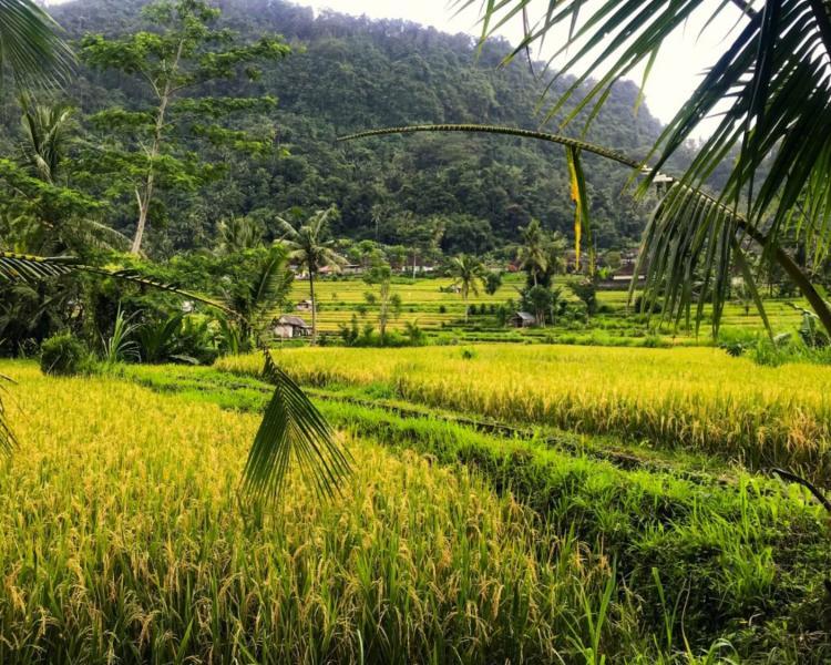 voyage à bali Trekking dans la région de Sidemen avec de belles collines et rizières