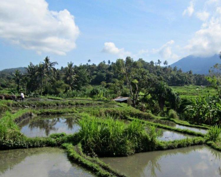 voyage à bali randonnée dans la région de Kastala Karangasem au pied de la montagne Agung