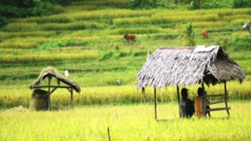 Randonnées dans les rizièrres de bali
