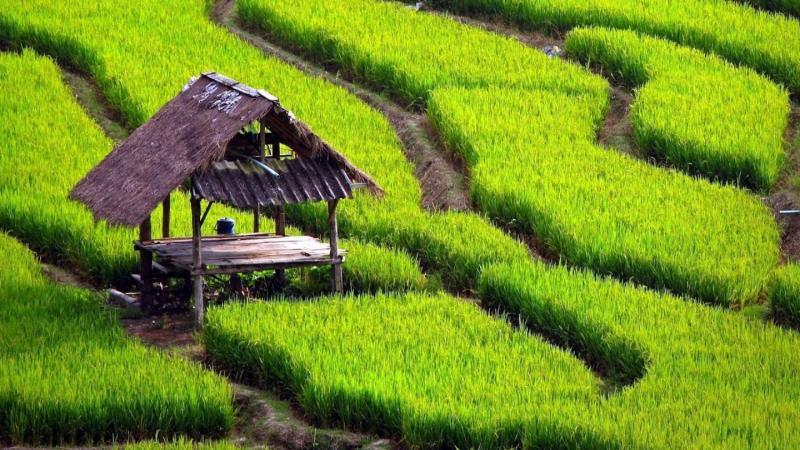 les rizierres en terrasses de tegalalang avec un guide francophone balinais-balilabelle