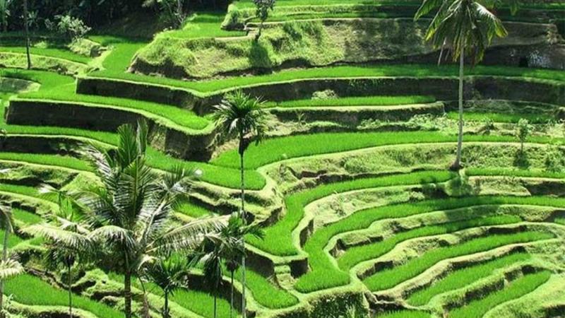 visiter le volcan batur et rizieres en terrases de tegalalang