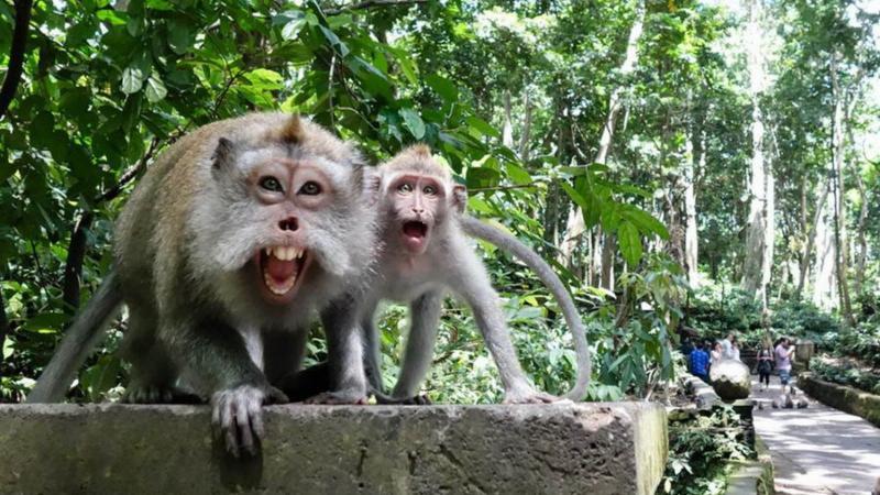 voyage tout inclus à Bali en famille- balilabelle