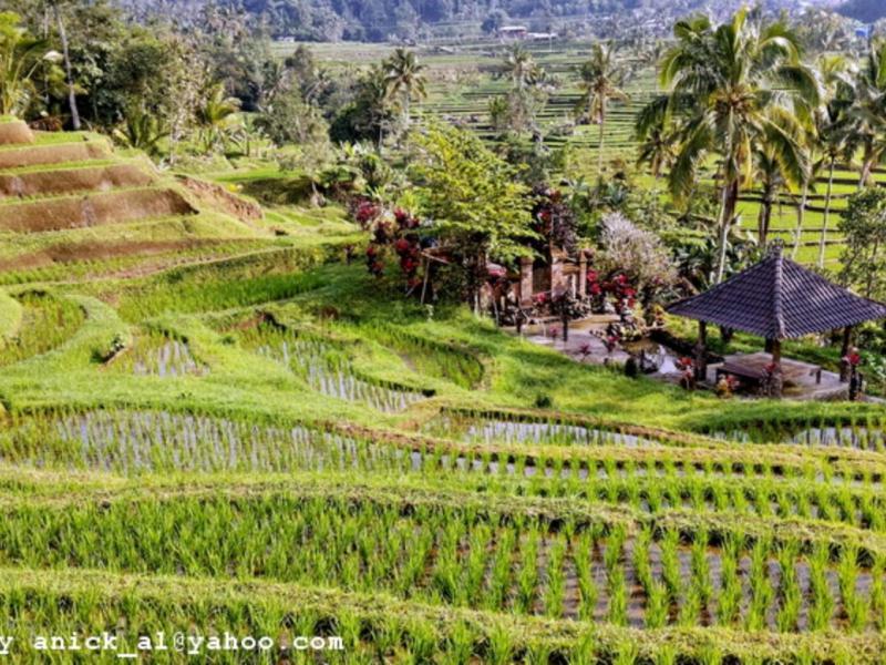 liste des activités de la visite quotidienne avec un guide francophone balinais-balilabelle