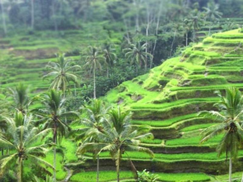 randonnée TOP dans les environs d'ubud avec un guide francophone balinais-balilabelle