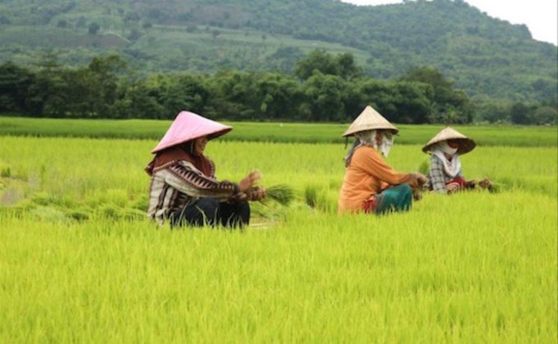 très belle randonnée dans les rizières d'ubud est enchanteur