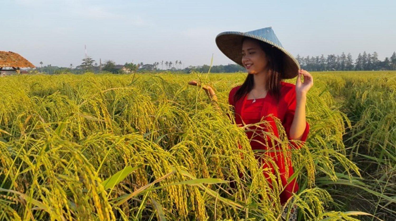 faire la balade dans la region tabanan à Bali