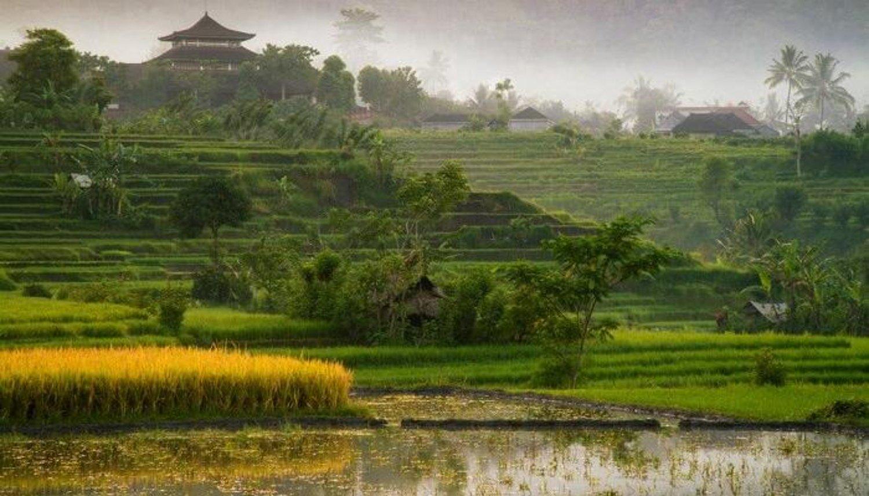 voyage à bali la beauté du village de munduk  et Cours de cuisine et offrandes