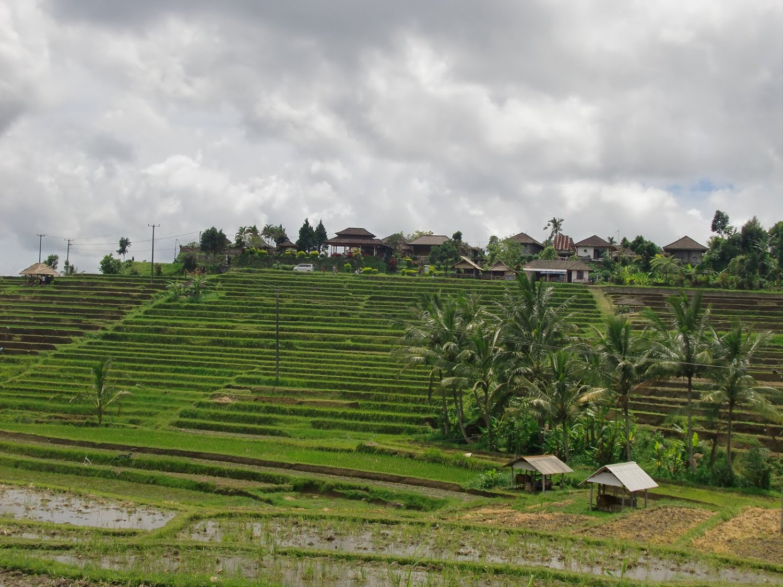 voyage à Bali avec  la randonnée a jatiluwih,et vtt avec  balilabelle