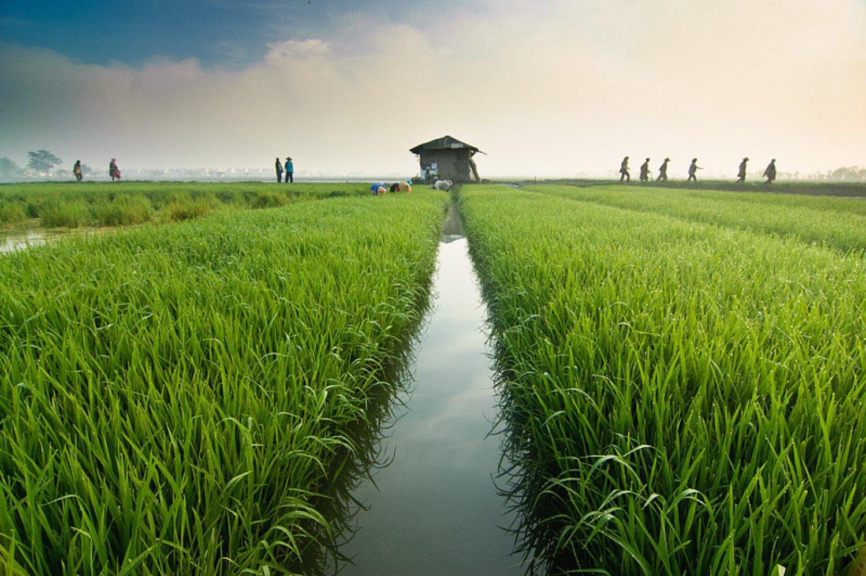 randonnée au village de pejeng, ubud