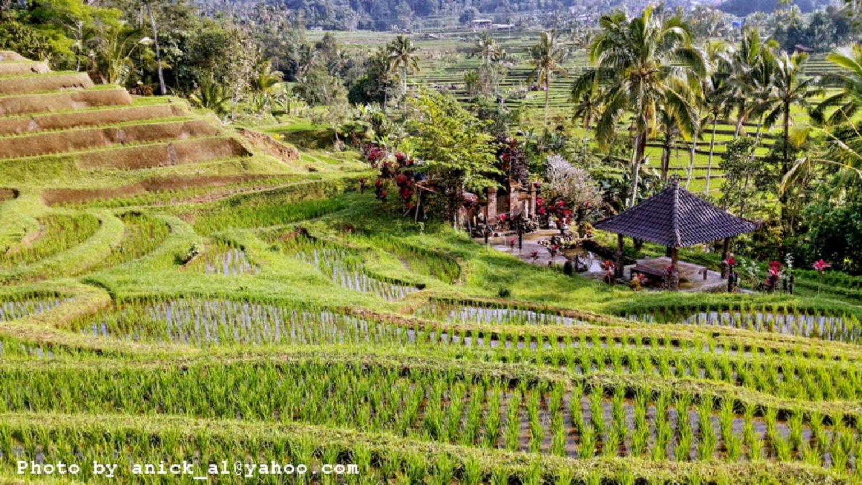 randonnée jatiluwih à bali Vue sur les rizières en terrasses,balilabelle