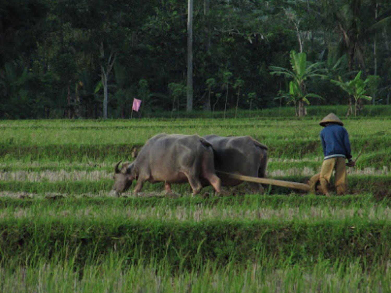 randonnée  à kastala,  tenganan ( village indigene),masque et tuba 2020