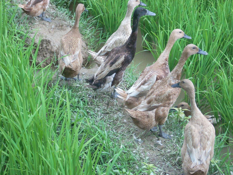 balade à pied Sidemen est célèbre pour les rizierres en terrrasses