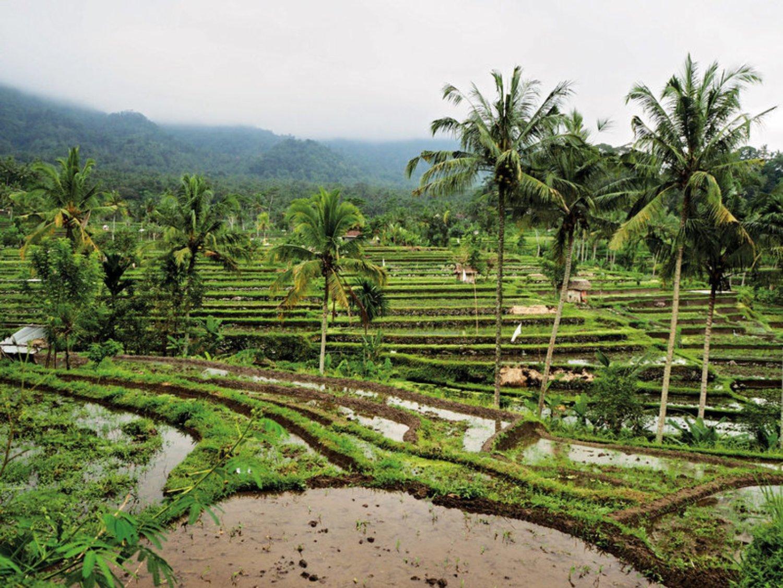 tres belle balade dans  le  village sidemen avec vue panoramique sur les rizières et les montagnes
