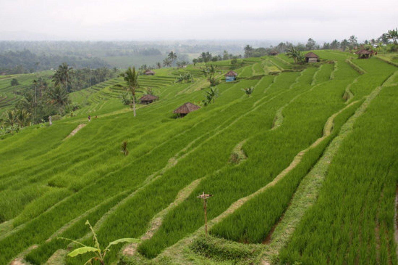voyage à bali randonnée dans le village Blimbing a Tabanan avec un guide francophone balinais