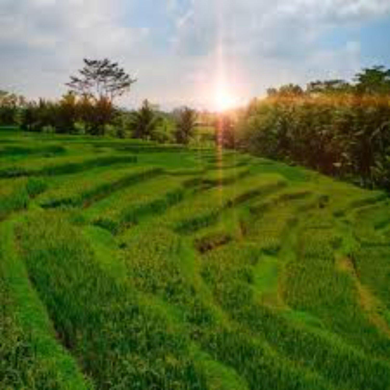 voyage à bali la randonnée jatiluwih village et coucher de soleil de tanah lot -balilabelle
