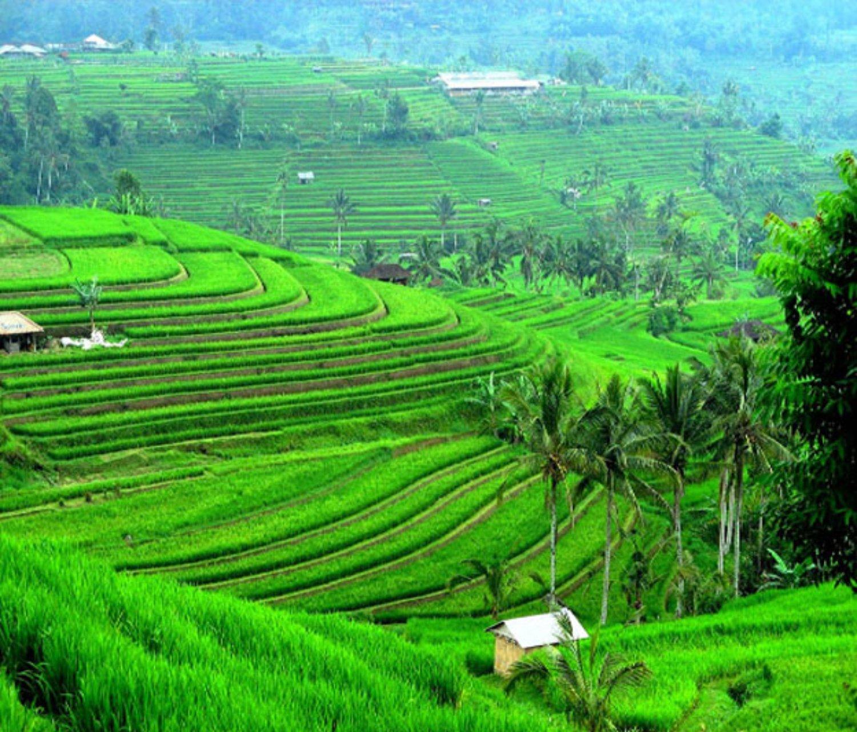 belle randonnée dans le village de jatiluwih et visite du village d'ubud-balilabelle