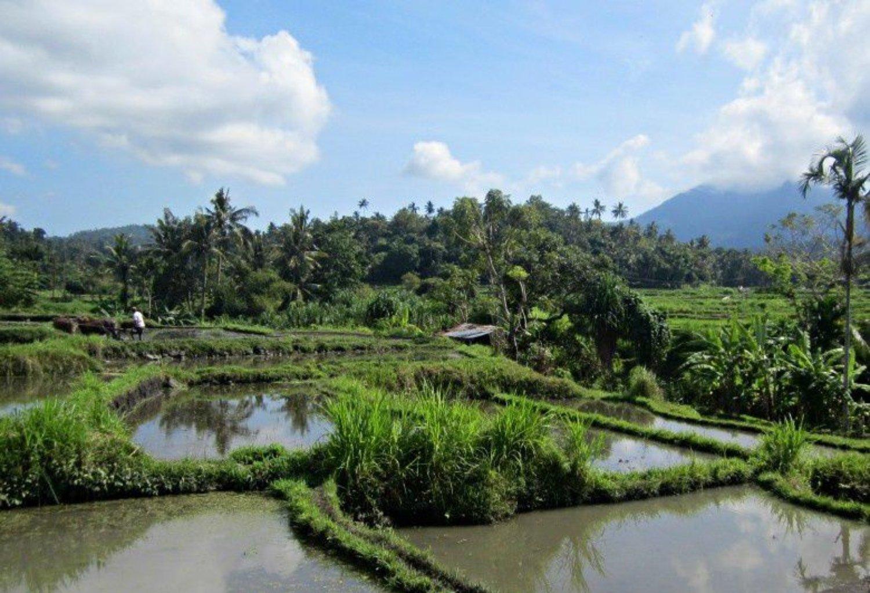randonnée dans la région de Kastala ,bali -Karangasem au pied de la montagne Agung