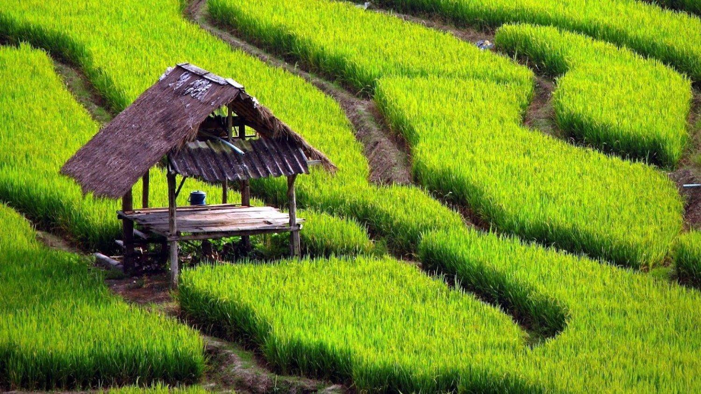 escalader le mont batur,-lever de soleil-les rizierre en terrasses