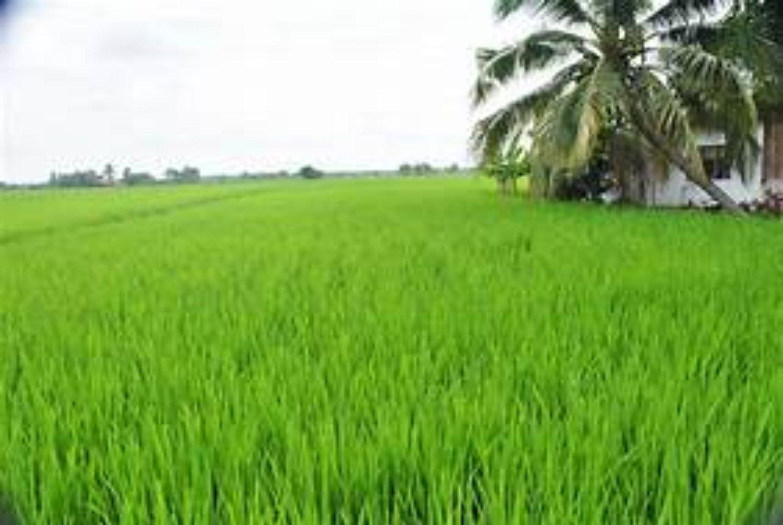 randonnée  à jatiluwih tabanan, bali la plus vaste des rizières en terrasses