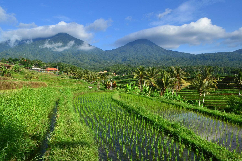 randonnée pour voir les activités des agriculteurs et cours de cuisine ,ubud -bali