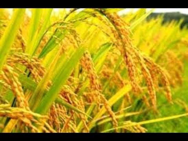 faire la balade à pied avec  la beauté du village de jatiluwih  et vue sur les rizières