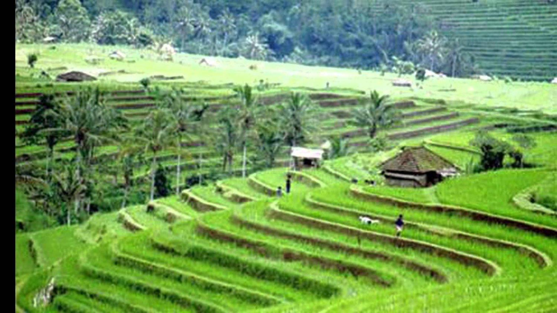 visite à pied dans les rizières de Jatiluwih est incroyable
