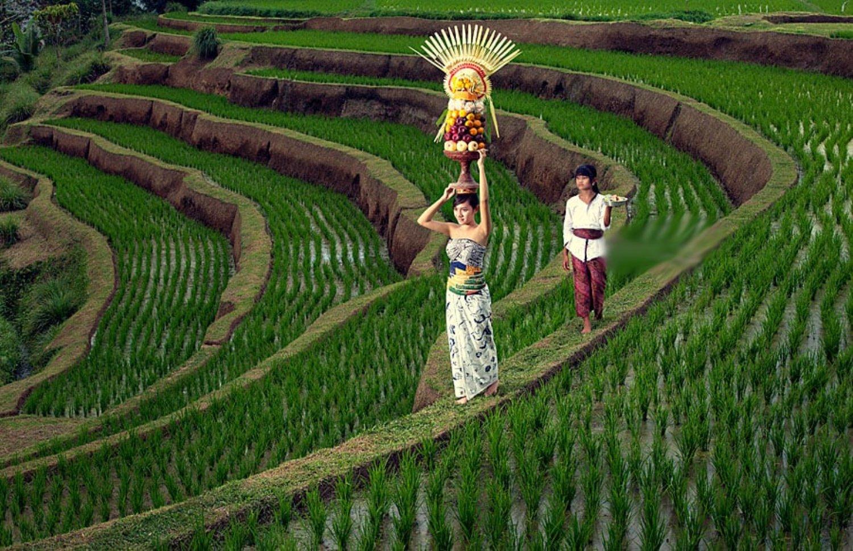 escalade du mont batur , le soleil se leve, rizierre en terrasse tegalalang