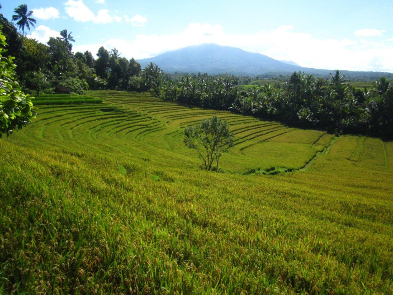 randonnée dans les rizières en terrasses avec un fond de montagnes jatiluwih