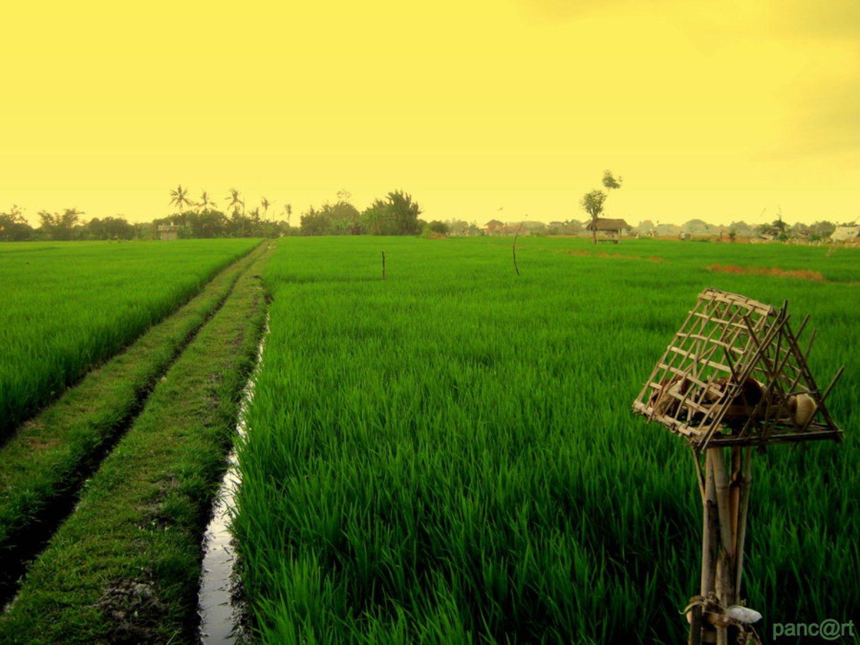 voyage à bali La randonnée dans le village Kastala  avec les rizières et Prasi White Sand