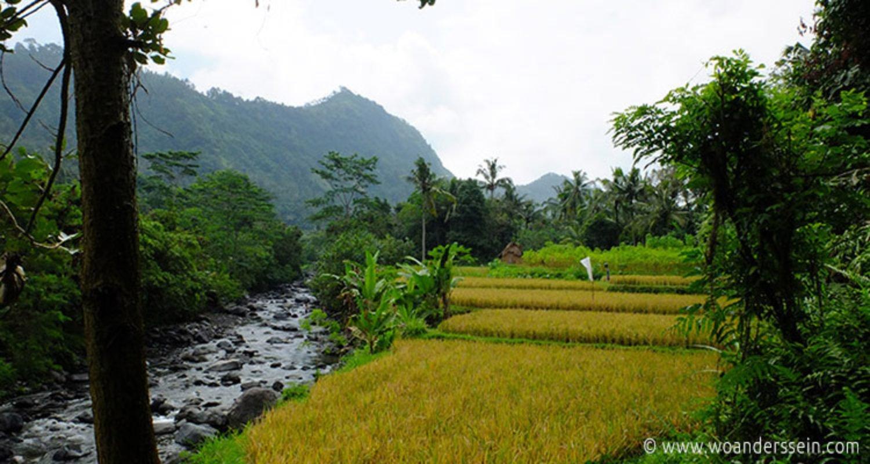 randonnée et Explorer Le village de sidemen avec trés belles rizières en terrasses