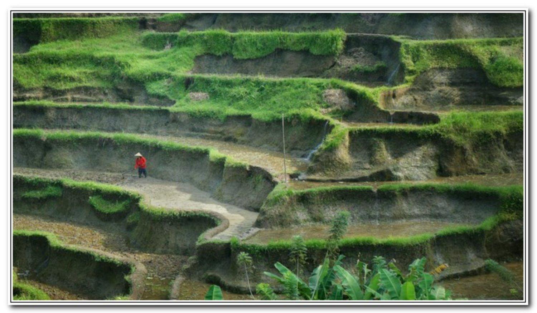 voyage à bali Le village de Jatiluwih est très étonnant de se promener dans les rizières