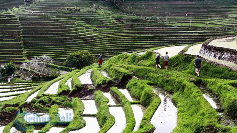 voyage à bali les rizierres en terrasses et coucher de soleil de tanah tot -balilabelle