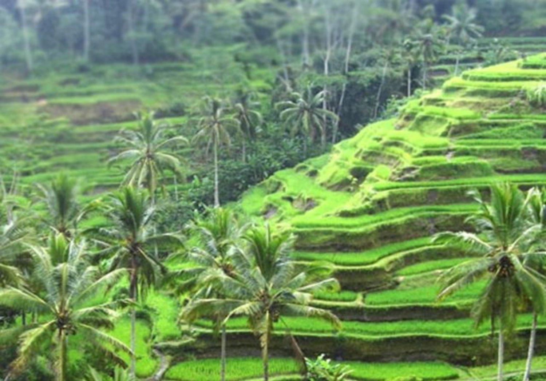 randonnées autour du village d'Ubud et cours de cuisine , Balilabelle