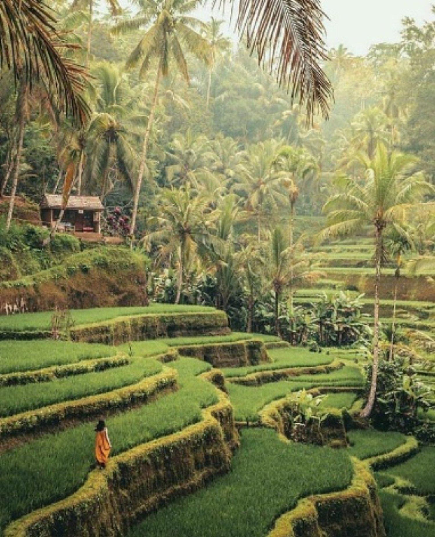 Tegalalang Rice Terrace Ubud