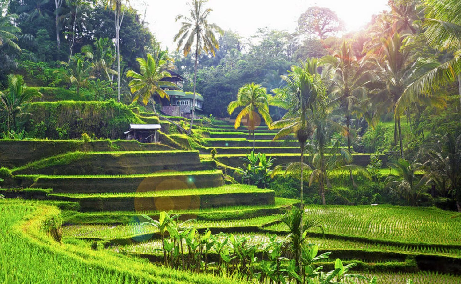 Tegalalang Rice Terrace Where to Eat