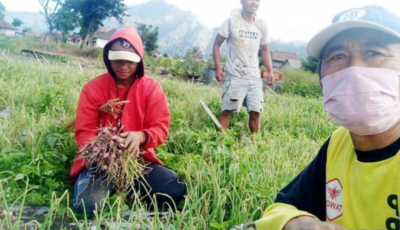 bisnis kopi sakit petani beralih ke sayuran 800 2020 04 04 144500_0